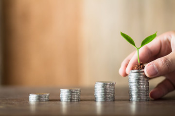 Four piles of money laid on wood, wood background, natural light, finance, interest, increase, four steps