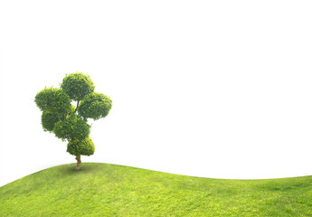 Tree bonsai green leaf.