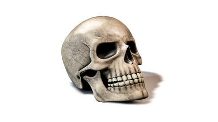 Totenkopf Schädel auf weißem Hintergrund - Konzept Tot, Angst oder Halloween