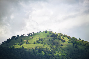 hill with green trees, the sky is grey and cloudy Wall mural