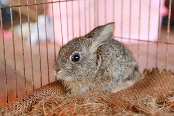 Grey rabbit in the cage.