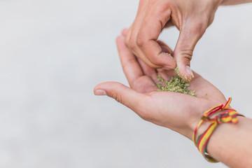 Joven haciendo un porro de Marihuana