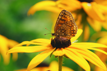 photo of butterfly on yellow flower