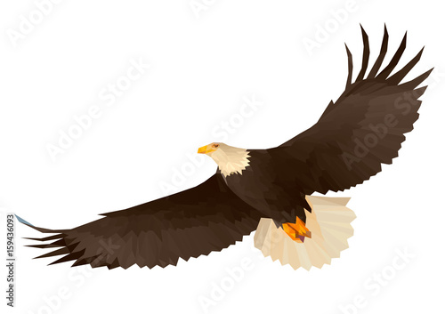 Soaring Eagle In The Sky Bottom View
