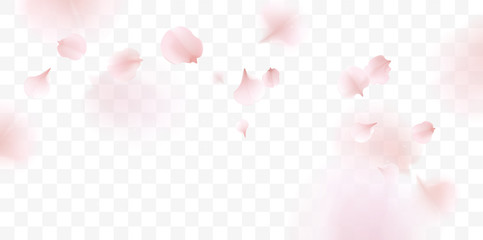 Pink sakura petals falling background