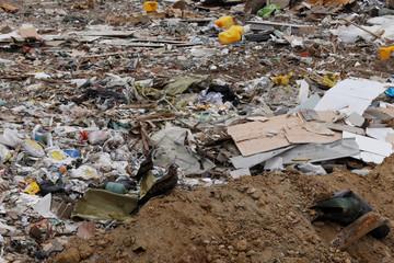 Birds are seen beside piles of garbage at a landfill at Tseung Kwan O district in Hong Kong