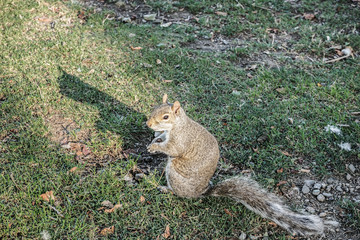 The squirrel and its shadow