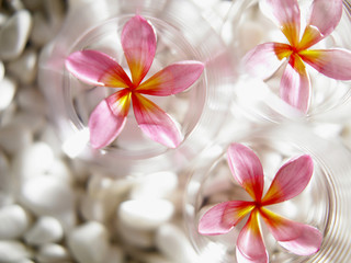 Flowers floating on bowls of water