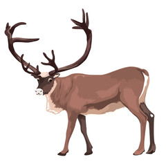 Vector Large Reindeer Isolated