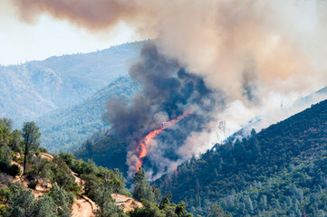 Fire in pine forest in Moccasin, California