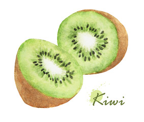 fresh kiwi. Hand drawn watercolor painting on white background.