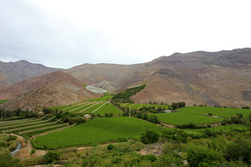 Vineyards used for Pisco in the dry Elqui Valley, Chile, South America