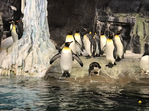 penguins in an enclosure