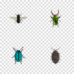 Realistic Bug, Dor, Insect And Other Vector Elements. Set Of Bug Realistic Symbols Also Includes Bug, Gnat, Insect Objects.