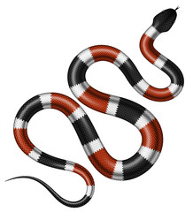 Coral snake vector illustration. Isolated tropical serpent on white background.