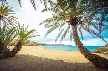 Scenic landscape of palm trees, clouds and tropical beach, Vai, Crete, Greece.
