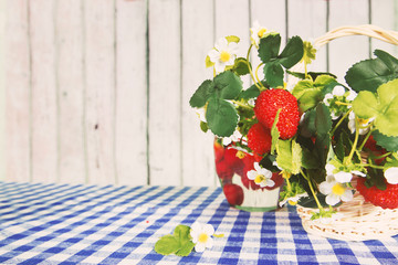 Strawberry bushes and Fresh strawberry homemade jam