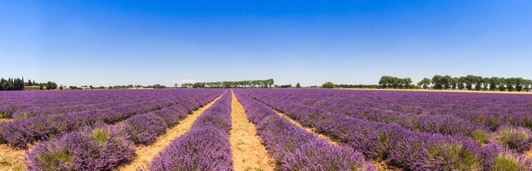 Printed roller blinds Lavender Panorama d'un champ de lavande en Provence, France