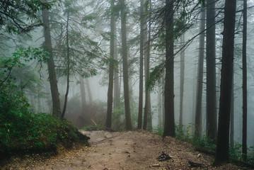 Misty mountain forest on the way to Sarnia Rock, Tatra Mountains