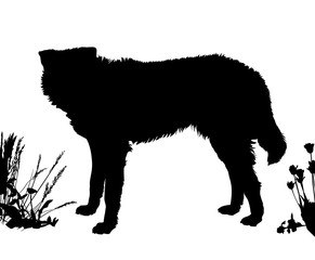 Dog stands sideways. Black silhouette isolated
