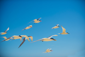 flying seagulls against blue sky at beach
