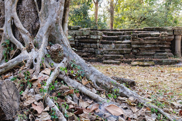 The roots and trunk of an old tropical tree growing near Baphuon Temple in Angkor Complex, Siem Reap, Cambodia.