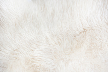 White fur close up background. Texture, abstract pattern. Wall mural