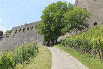 Wandern auf dem Weinwanderweg Würzburg Frankenwein