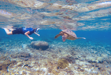 Woman snorkeling with green turtle. Turtle and snorkel underwater