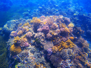 Underwater landscape with coral reef under sunlight. Diverse coral formation with seaweed.