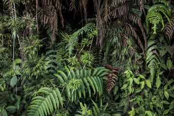 Green rain forest.