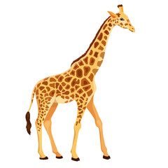 Vector Giraffe Standing Isolated