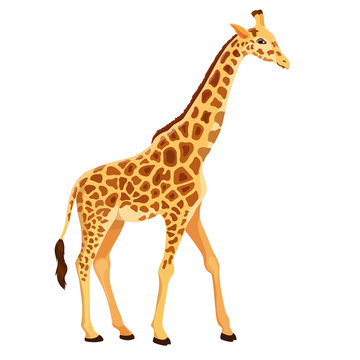 Vector Giraffe Standing Isolated