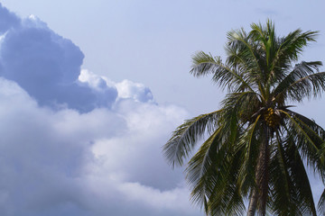 Cloud on sky and palm tree crown. Skyscape with big cloud photo.