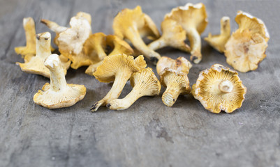 yellow chanterelle (cantharellus cibarius) on a rustic wooden background