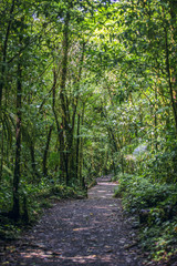 Tropical green forest path