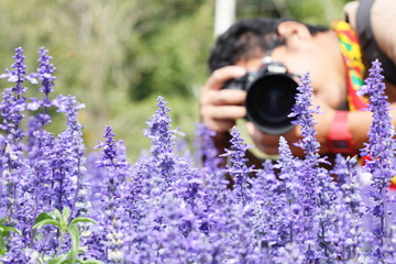 The man taking photo of many little purple flowers
