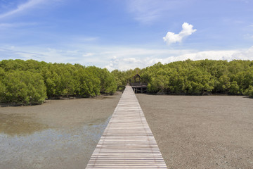 Green mangrove forests