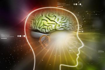 representation of female brain