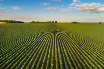 Landscape of soybean field in plains Wall mural