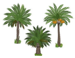 Palm trees set