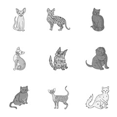 Collection of cats in one picture. Different cats in one picture. Cat breeds icon in set collection on monochrome style vector symbol stock illustration.