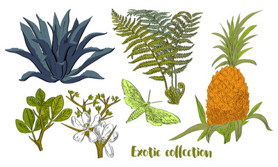 Vector drawn set of exotic plants and fruits in a sketch style. Exotic collection.