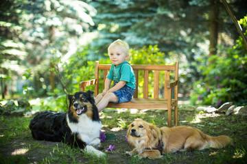 Spaß mit den zwei Hunden
