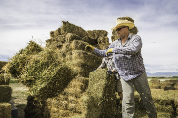 Mature man throwing hay bale