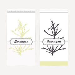 Hand drawn tarragon in outline and silhouette style. Spicy herbs