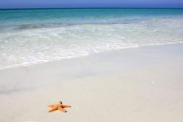 Orange starfish on the white sandy beach at Siesta Key Florida