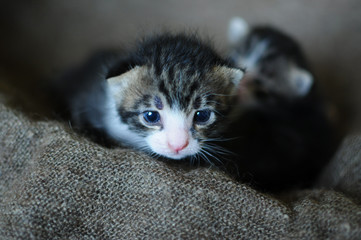 Kittens. Small, lovely creatures.
