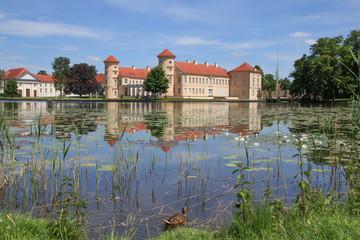 Schloss Rheinsberg, Seerosen, Ente