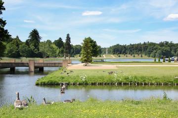 Schloss Rheinsberg, Schlossgarten, Graugänse